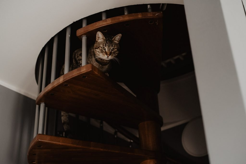 cat photo on the stairs